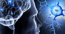 MS Serotonin Düzeyleri