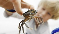 Kabuklu Deniz Ürünleri Alerjisi