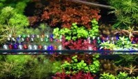 İç Mekânda Bitki Yetiştirirken LED Işık Kullanımı